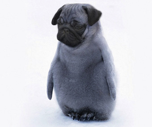 photoshop, cute, and pinguin image
