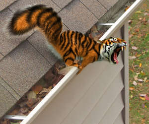 tiger and squirrel image