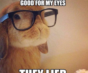 bunny, funny, and glasses image
