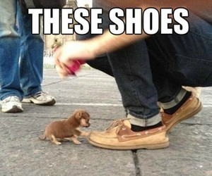 puppy, shoes, and cute image