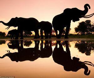 elephant, animal, and africa image