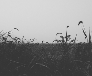 black and white, field, and black image