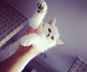 cute, cat, and love image