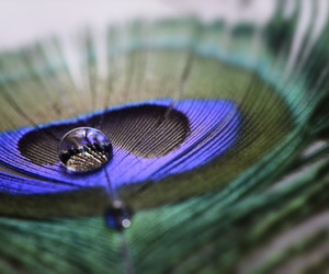 droplet, feather, and macro image