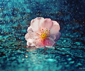 beautiful, drops, and flower image