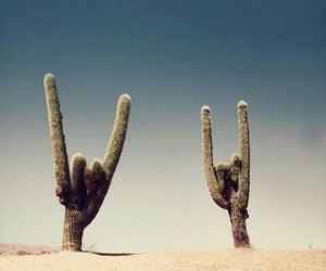 cactus, desert, and rock image