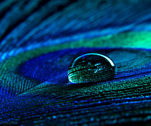 drop and photography image