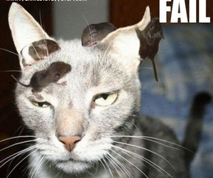 funny, funny images, and failed cat image