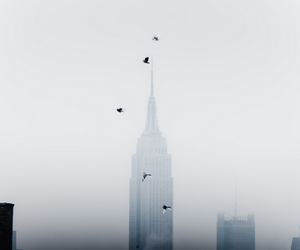 bird, new york, and photography image