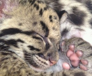 feline, cute, and paw image