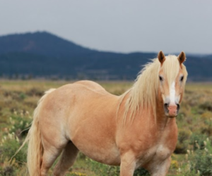 horse, mountain, and pony image