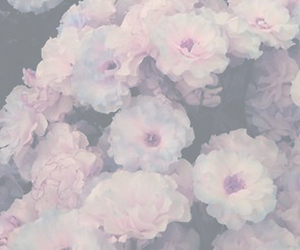 flowers, header, and white image