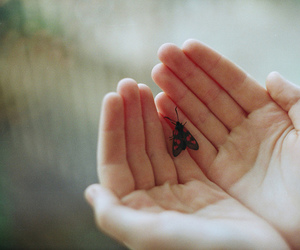 vintage, butterfly, and hands image