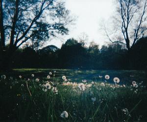 beautiful, nature, and photography image
