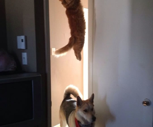 cats, funny, and lovely image