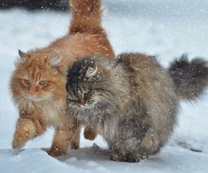 cat, snow, and animals image