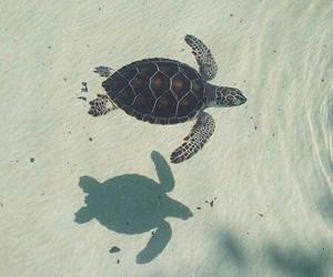 turtle, animal, and sea image