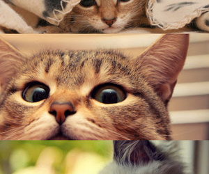 cats, sweet, and cute image