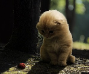 cute and kitten image