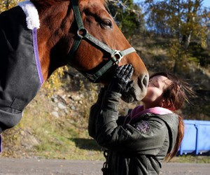 animal, horse, and kiss image
