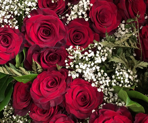 pretty, red, and rose image