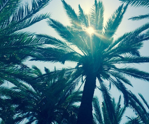 beautiful, palm, and leaves image