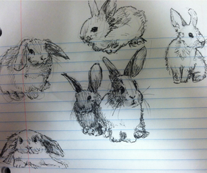 rabbit, drawing, and bunny image