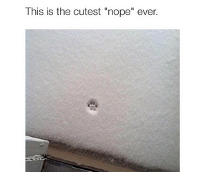 cute, cat, and nope image