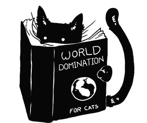 cat, funny, and world image