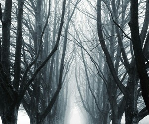 trees, winter, and forest image