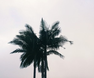 beach, black and white, and palms image