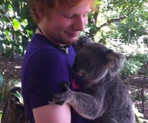 ed sheeran, Koala, and ed image