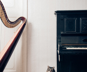 cat, piano, and vintage image
