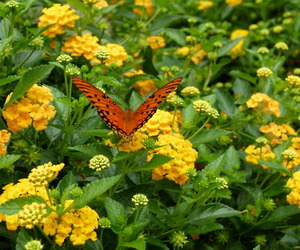 beautiful, butterfly, and orlando image