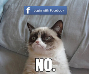 cat, facebook, and lol image