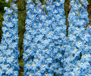 perfect flower blue cute image