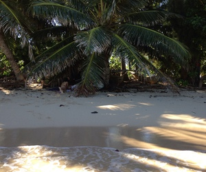 beach, palms, and travel image