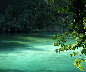nature, water, and green image