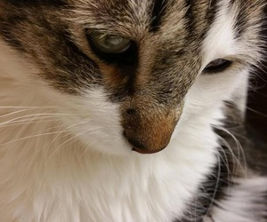 cats, cute cats, and ecute image