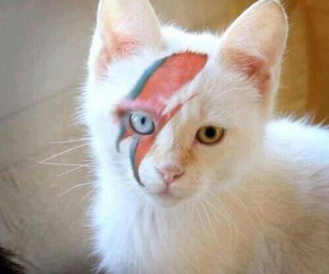cat, david bowie, and bowie image