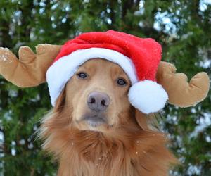 christmas, dogs, and raindeer image
