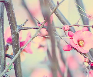 flowers, header, and love image