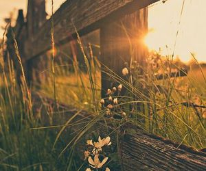 garden, sunset, and meadows image