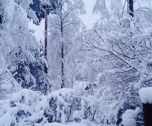 finland, nature, and snow image