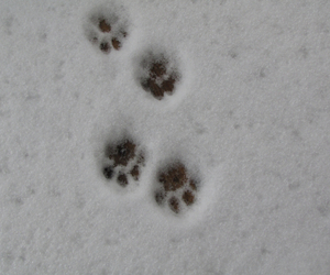 cat, cold, and paw image