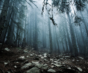 forest, place, and trees image
