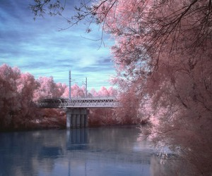 bridge, pink, and tree image