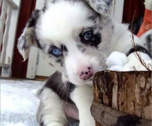 blanco, cachorros, and invierno image