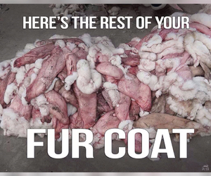 coat, fur, and hate image