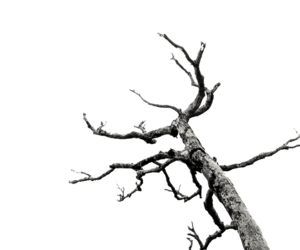 dead tree, deviantart, and transparent image